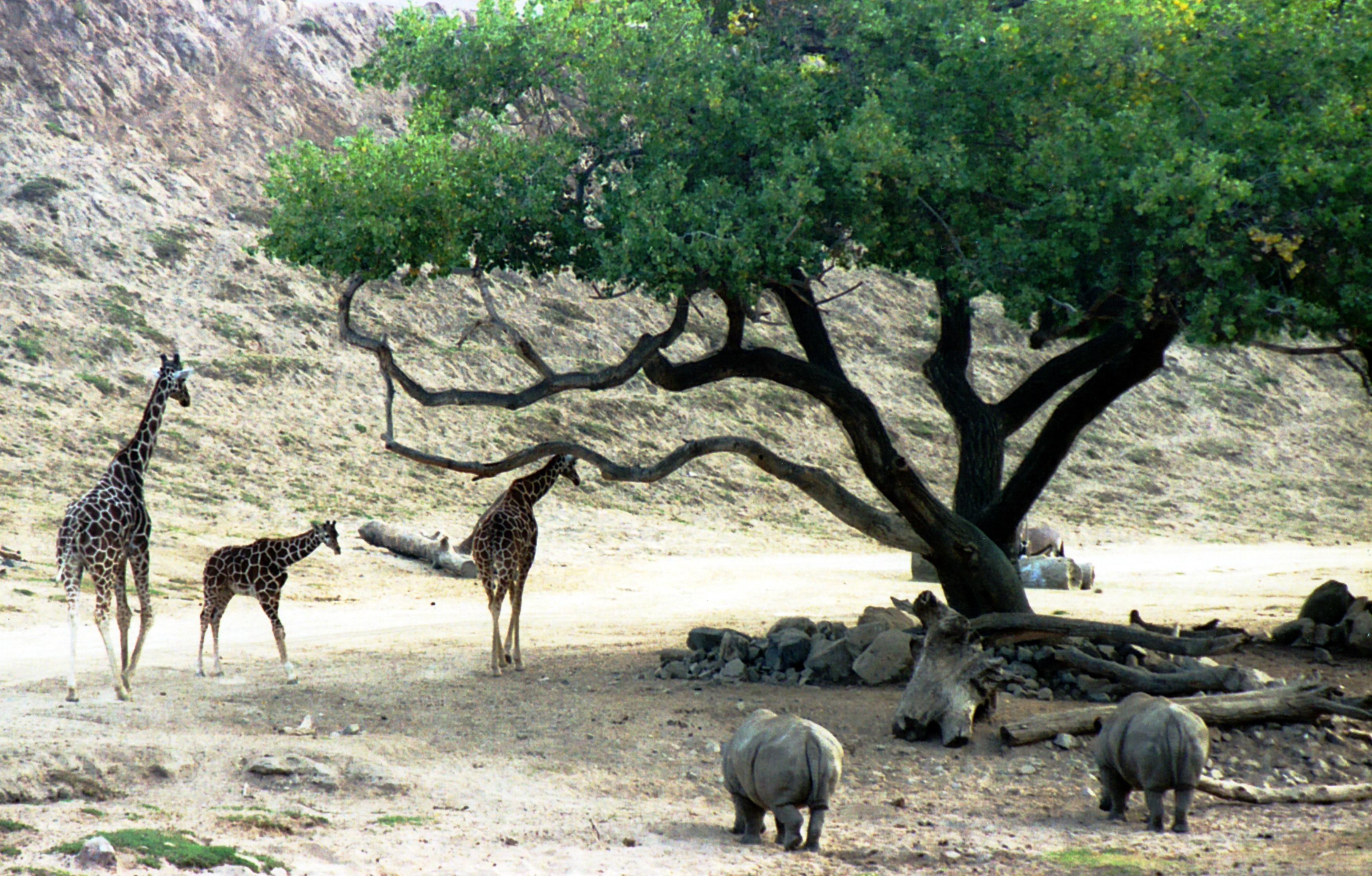 San Diego Zoo Safari Park, San Pasqual Valley, California, United States of America