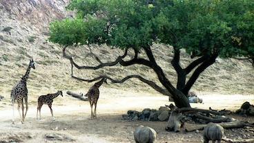 Zoologická
