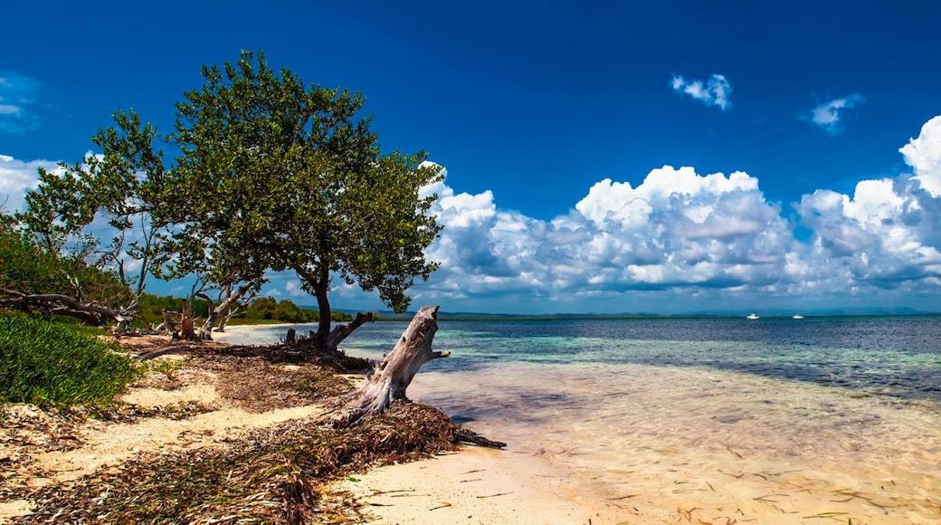 Photo by Online Tours Cuba