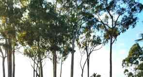 Kukaniloko Birthstones State Monument