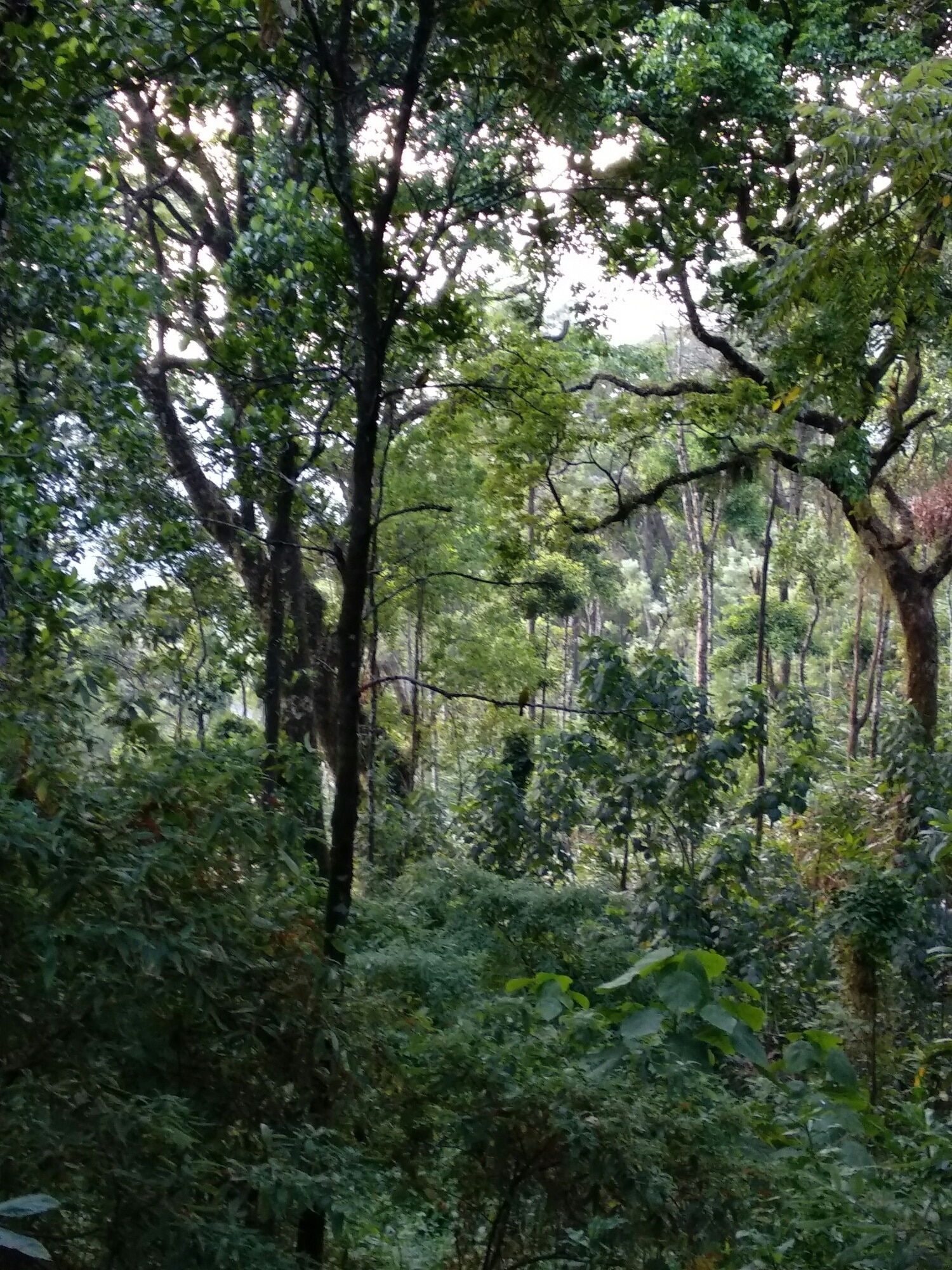 Pallivasal, Devikolam, Kerala, Indien