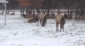 Elk Country Látogatói Központ