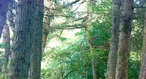 Calderglen Country Park