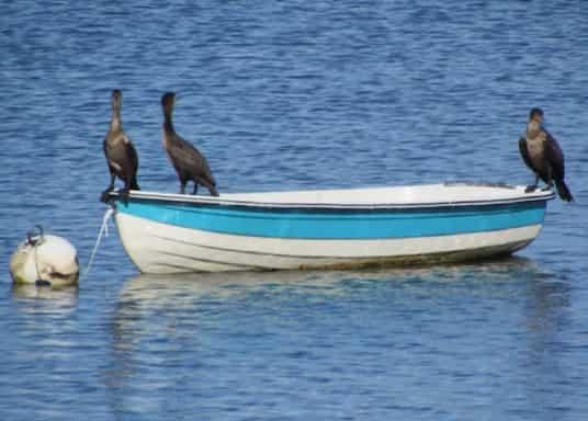 Lady Lake, Florida, United States of America