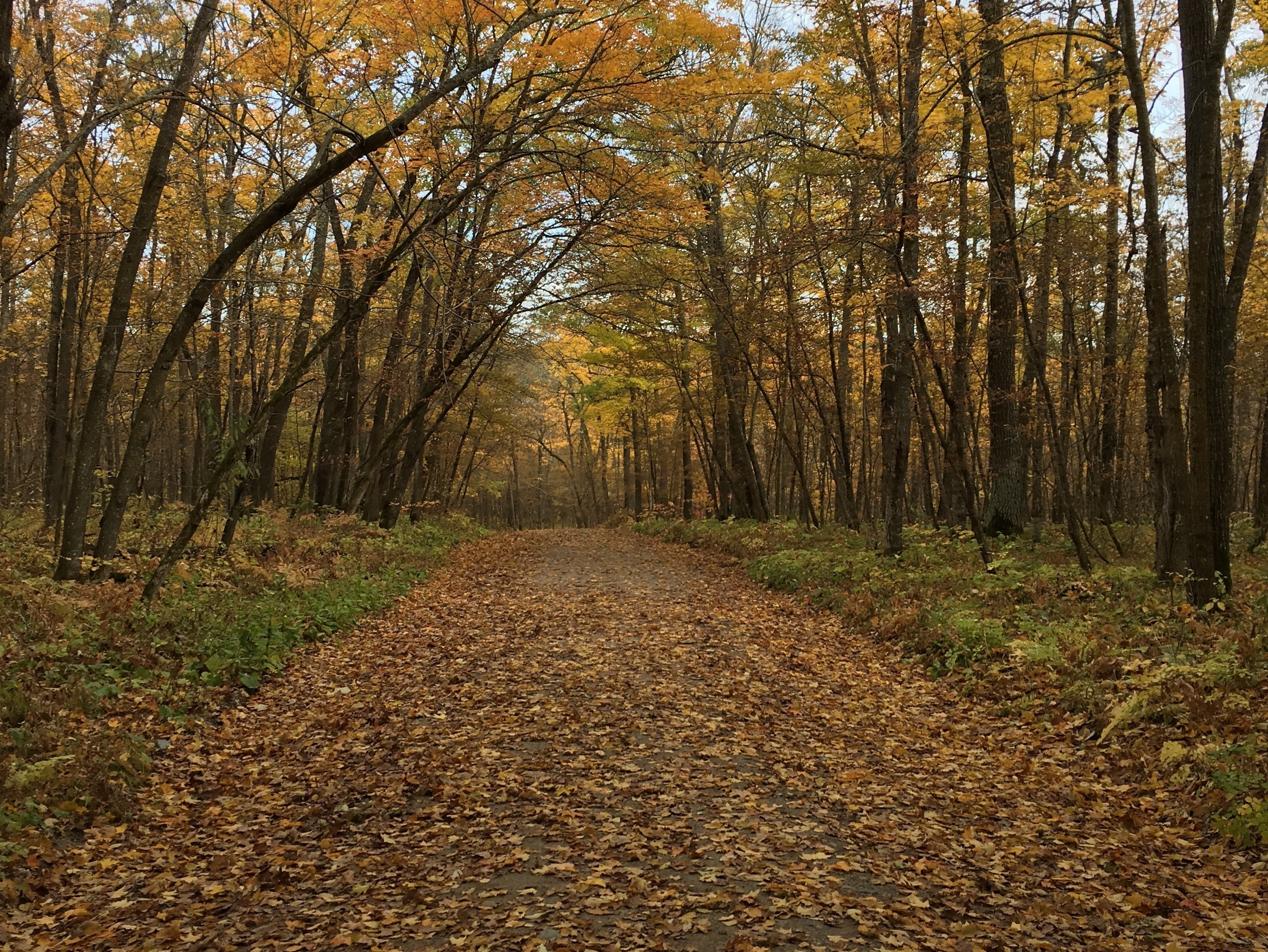 Park Rapids, Minnesota, United States of America