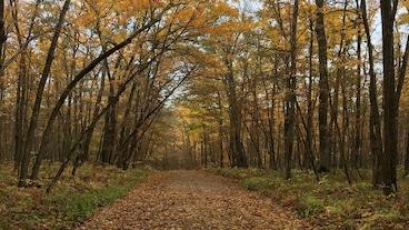 イタスカ州立公園/