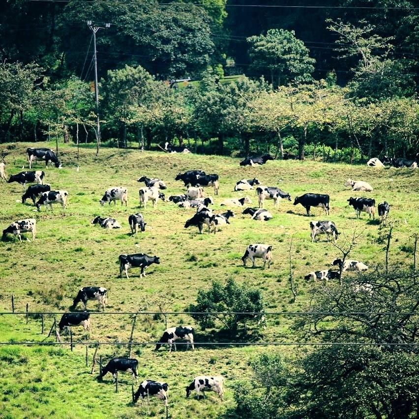 Curridabat, San Jose Province, Costa Rica
