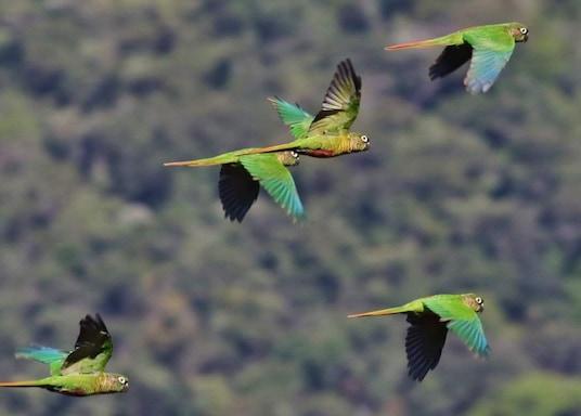毛阿子爵地區, 巴西