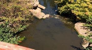 Osawano Japanese Garden