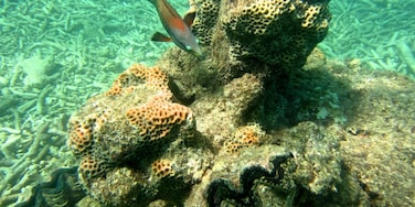 Great snorkeling in the Whitsundays.