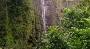Hana Forest Reserve