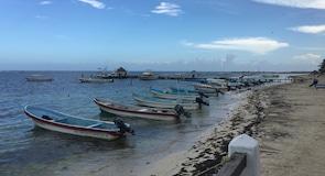 Korallenriff von Puerto Morelos