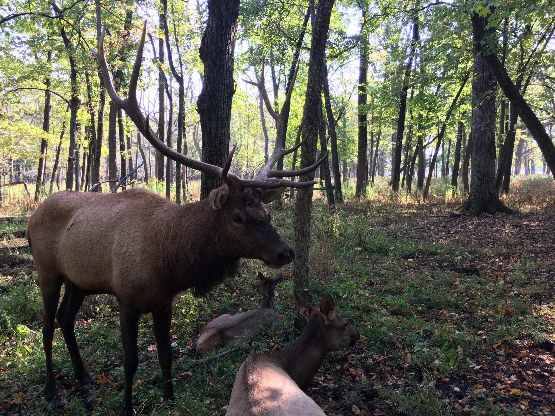 Elk Grove Village, Illinois, United States of America