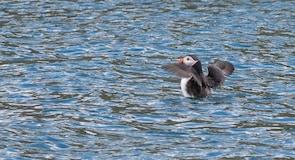 Centro scozzese per gli uccelli marini