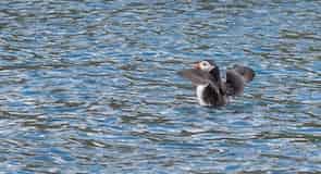 Centro Escocés de Aves Marinas