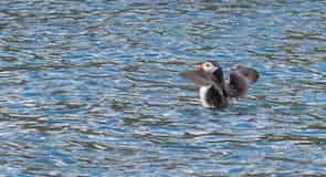 Scottish Sea Bird Center