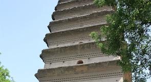 Suuren villihanhen pagodi