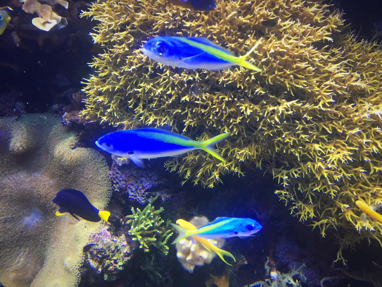 Denver's Downtown Aquarium, Denver, Colorado, United States of America