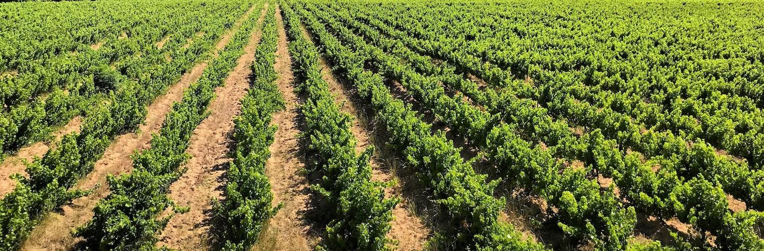 Vinområdene rundt Cape Town, Sør-Afrika
