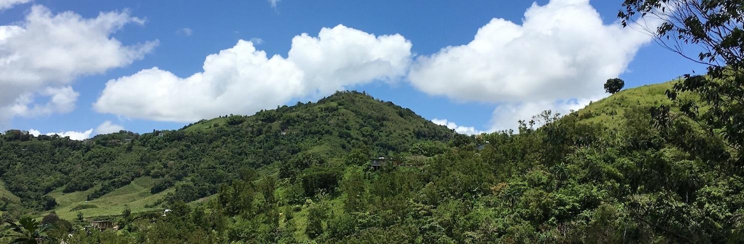 艾博尼托, 波多黎各