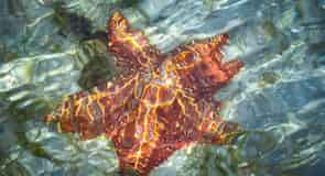 חוף סטארפיש