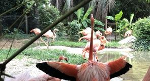 Ziemeļkarolīnas Zooloģiskais dārzs