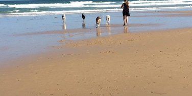 With the dogs at the local beach, beautiful sunny day