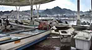 שוק הדגים מוטרה