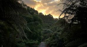 Кар'єрний парк «Te Puna»