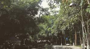 גן החיות לנמרים סרירצ'ה