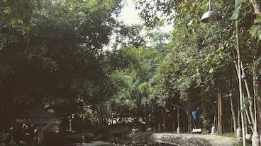 是拉差龍虎園