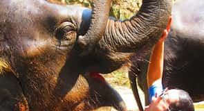 Patara Elefantenfarm