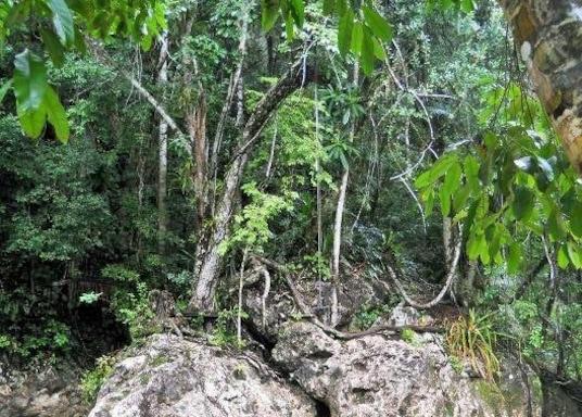 Mountain Pine Ridge, Belize
