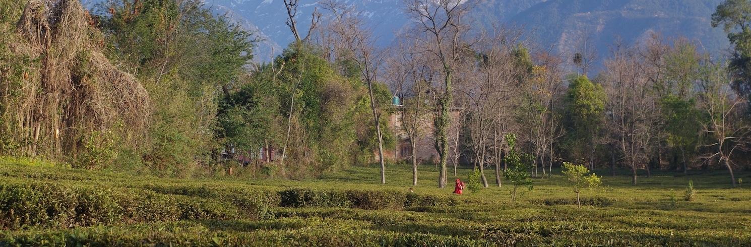 Palampur, Ấn Độ