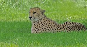 Καταφύγιο Ζώων The Wilds