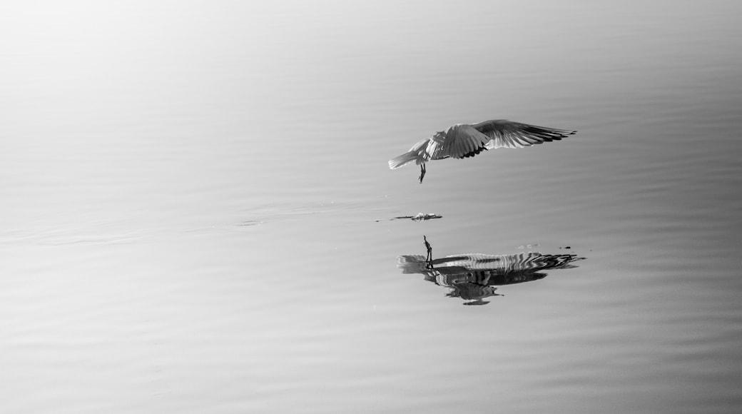 Foto van Daniel Boavida