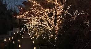 حدائق بروكجرين