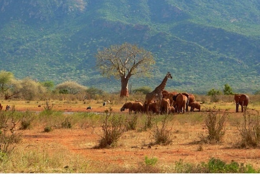 Shanzu, Kenya