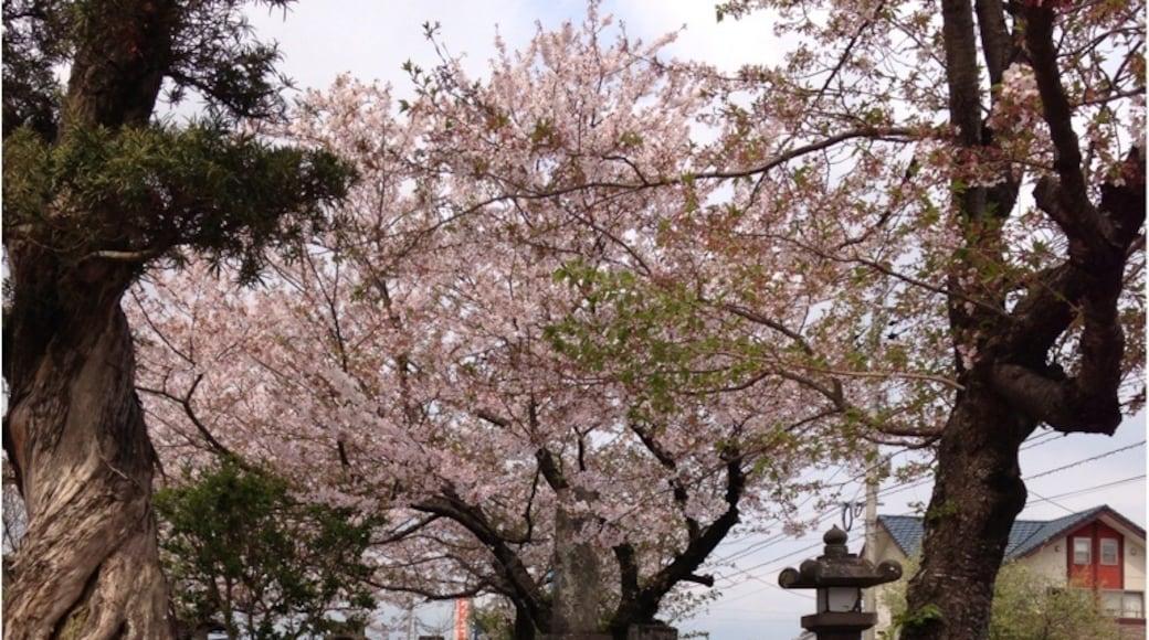 相片由 Shoko Yoshimura 提供