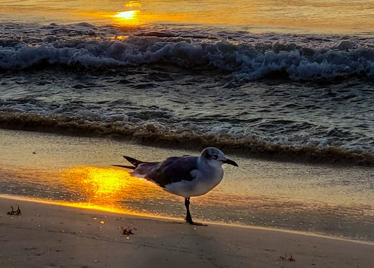 Playa del Carmen, Mexiko