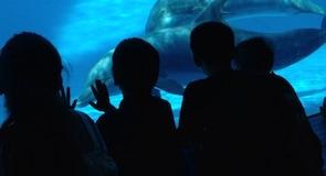 Teksaso akvariumas