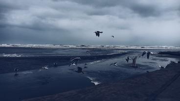 海洋公園/