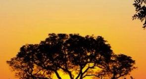 玛拉玛拉野生动物保护区