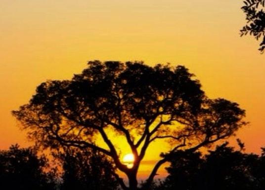 Kruger (parc national), Afrique du Sud