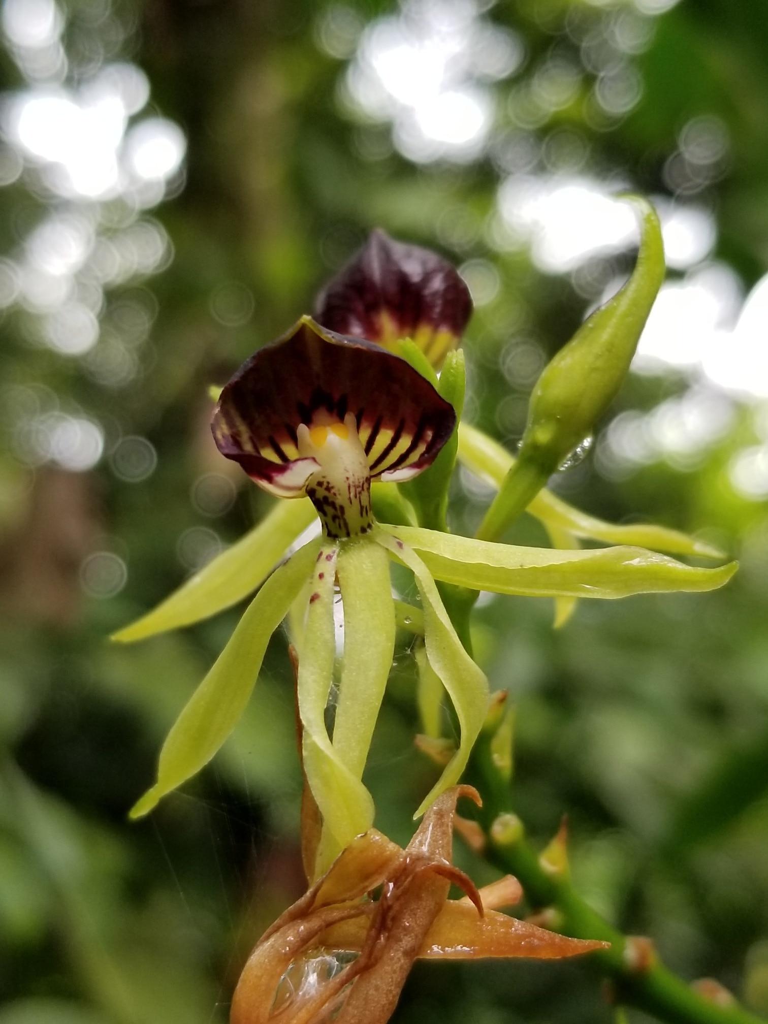 San Ramon, Alajuela (provincie), Costa Rica
