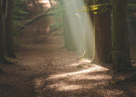 Parque Nacional Utrechtse Heuvelrug, Países Bajos