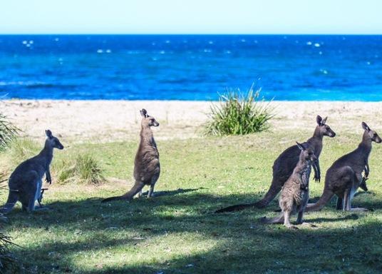 Pretty Beach, New South Wales, Australia