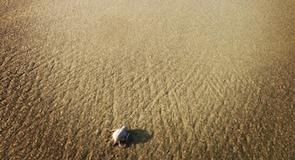 Playa Piro