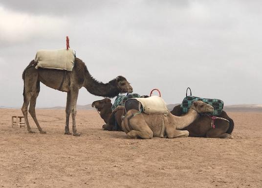 Sīdī Badhādža, Maroka