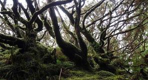Reserva Florestal Parcial da Serra de S. Barbara e dos Misterios Negros